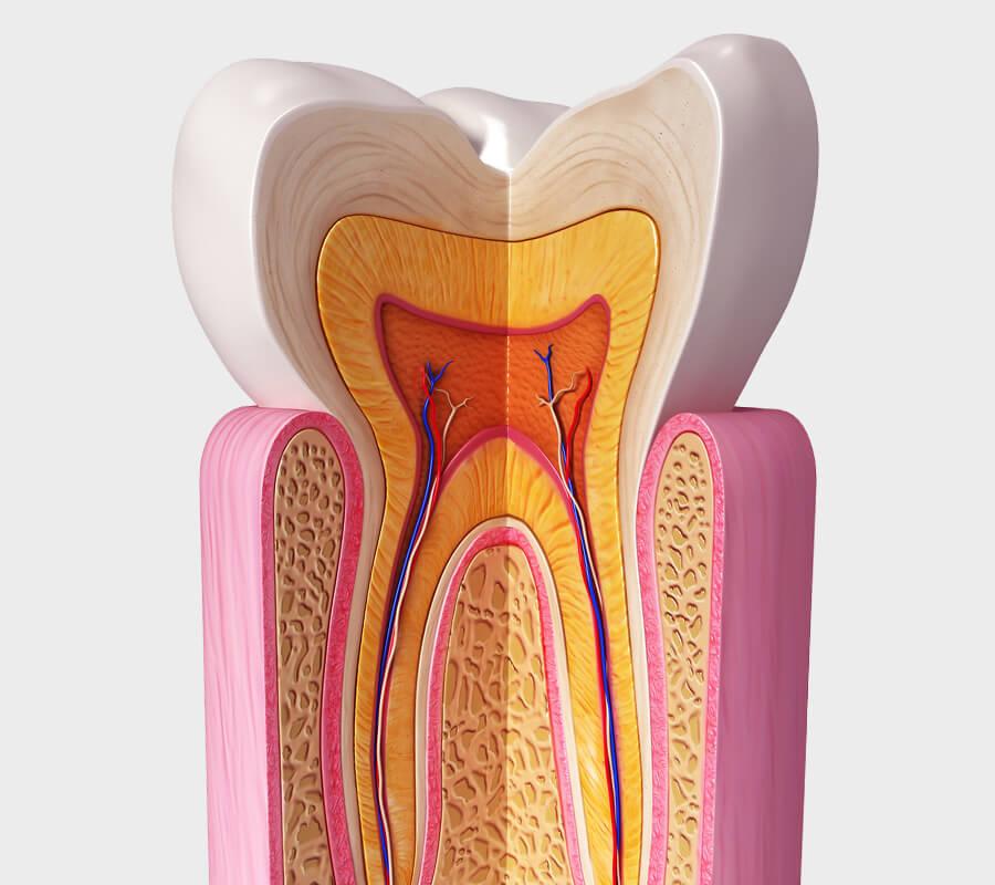 endodontologie-mobile